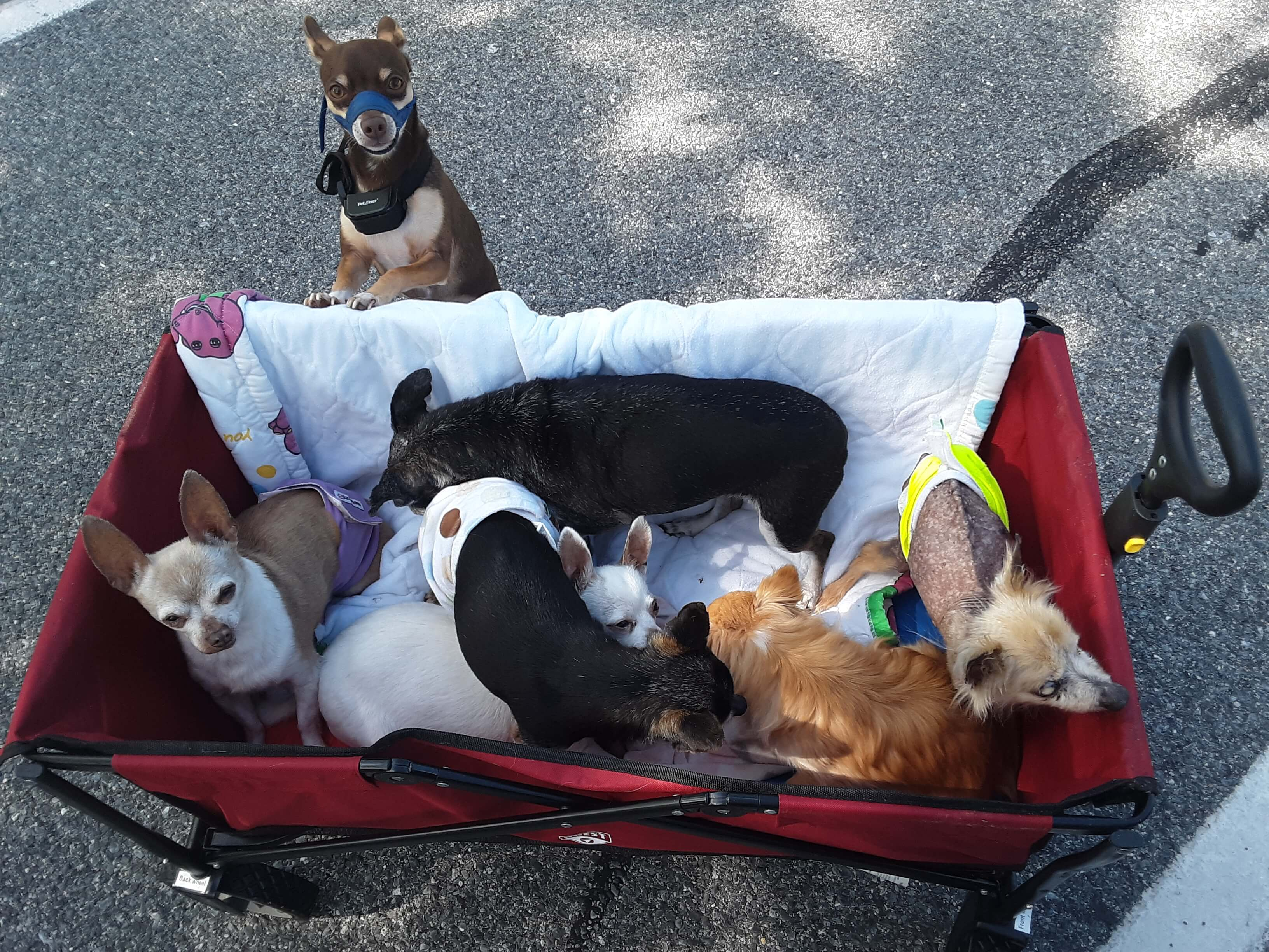 Wilma_Peppers_Dogs